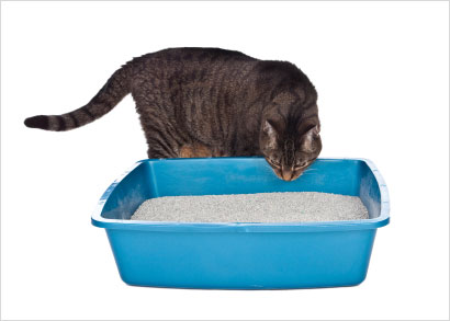 10 Tips for Improving Litter Box Appeal