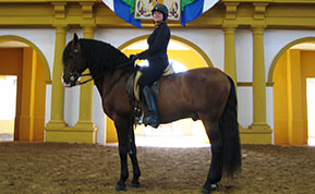 Sharon Madere, Certified Horse Behavior Consultant