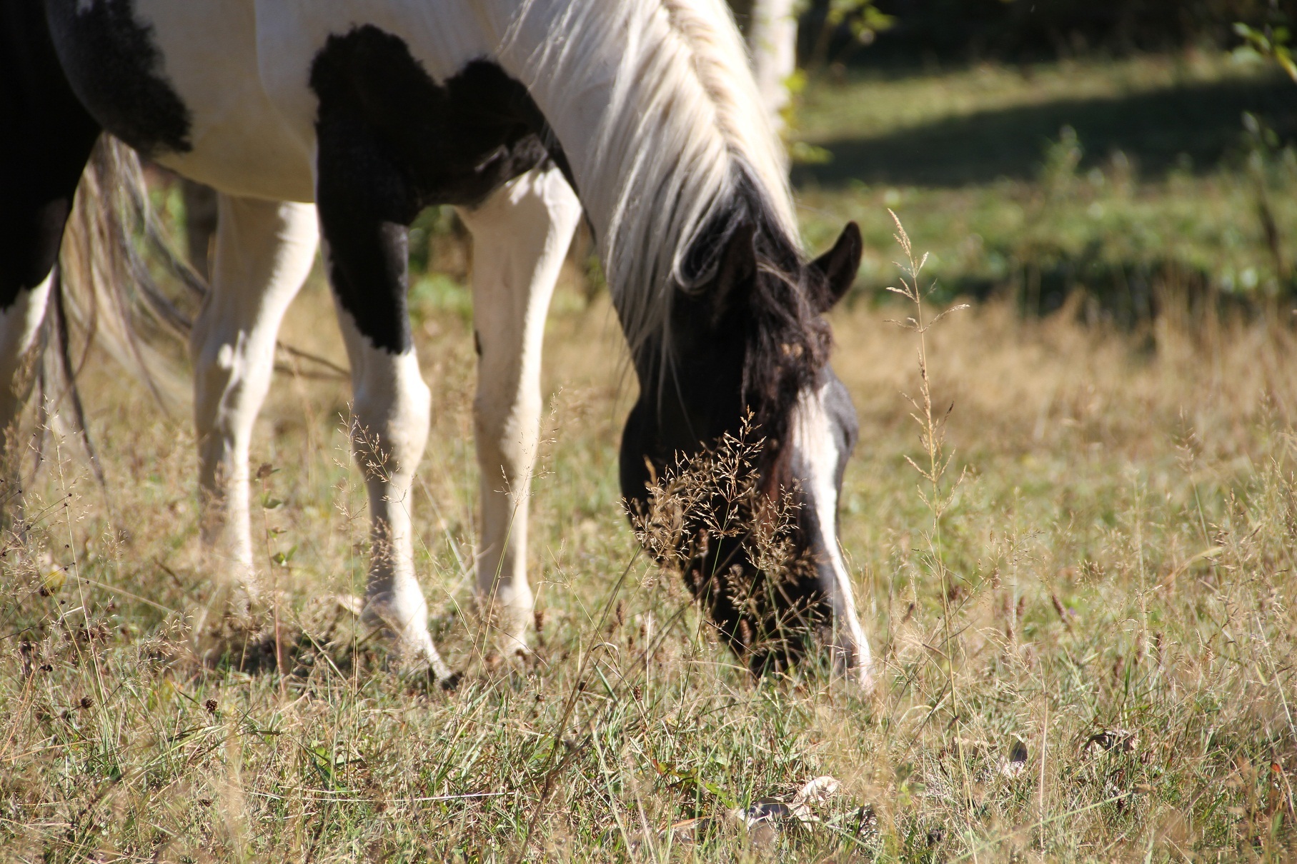 The Horse's Manifesto: What do we want?? Friends, Forage and Freedom! Part 2 of 3