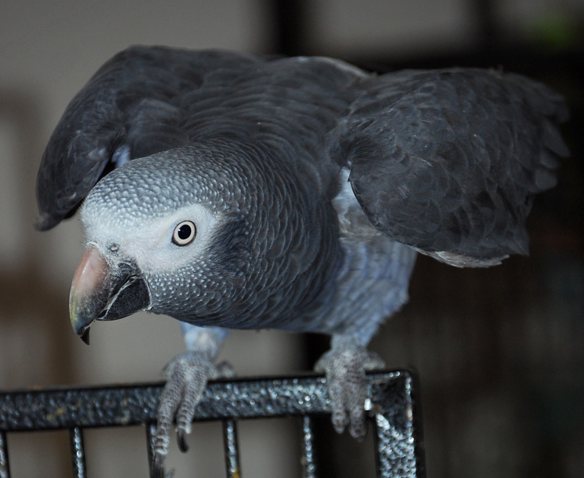 A Lesson From Barnaby - The Power of Science in Parrot Behavior Modification